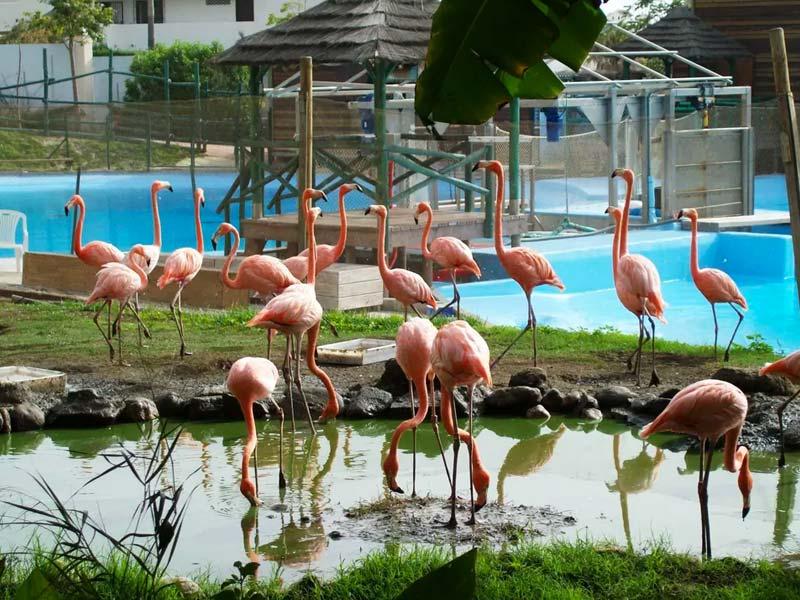 birds rare selwo marina